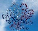 186 парашютистов установили рекорд в небе над Коломной
