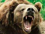 Медведь убил два человека на Комчатке