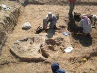 Биоинформатики обнаружили архейное происхождение цитоскелета