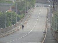 Во Владивостоке открылось движение по Рудневскому мосту