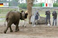 Смотреть онлайн 1/2 финала Евро-2012 Германия – Италия прямая трансляция. 28 июня 2012 г.
