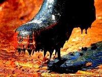 Компанию Total признали виновной в разливе нефти