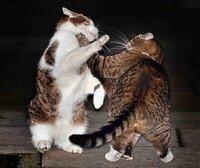 Главный кот Великобритании Ларри подрался с кошкой министра финансов - Фрей