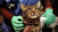 В Нью-Йорке во время урагана было спасено около 600 домашних животных
