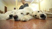 Собака-терапевт принимает пациентов