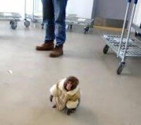 Обезьянка в пальто удивило клиентов IKEA в Торонто