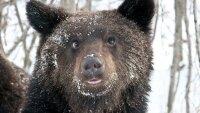 Медведь-шатун пугает отдыхающих в природном парке