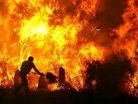 Лесные пожары в Австралии: людей призывают готовиться к худшему