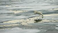 Арктическая программа России потребует более $300 млн