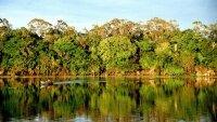 Леса Амазонки уменьшились на 1,3 тыс кв км