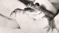 Ученые воскресили лягушку