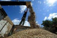 Белоруссия признала массовые приписки в сельском хозяйстве