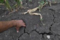 Минсельхоз оценил ущерб от засухи и наводнений в России