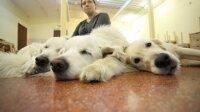 В Якутске изучают ткани собаки, жившей почти 12,5 тысяч лет назад